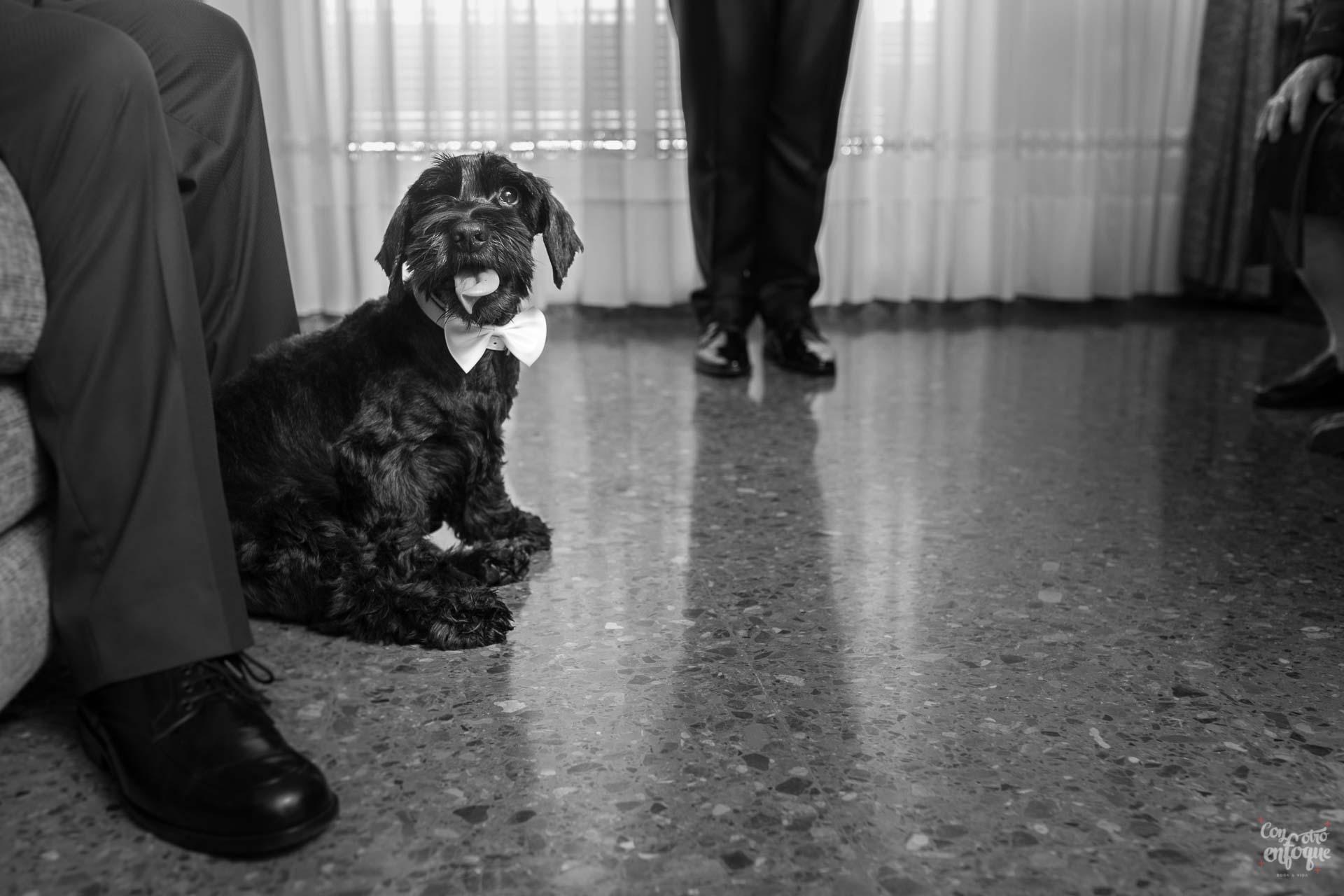 novio. abuela. padre. perro con anillos. Boda en Quart de Poblet. Boda en Valencia. Fotógrafos de Boda en Valencia