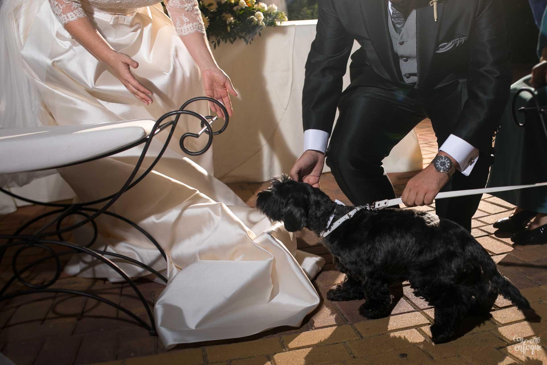 novia novio perro anillos boda civil boda en hotel adhoc bétera